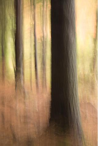 treesfolio-110